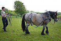 2012 05 19 working with draft horses 1